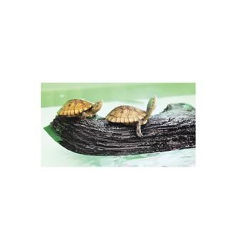 烏龜 兩棲 日本 SUISAKU水作 烏龜浮島 M  青蛙 蟹類 蠑螈