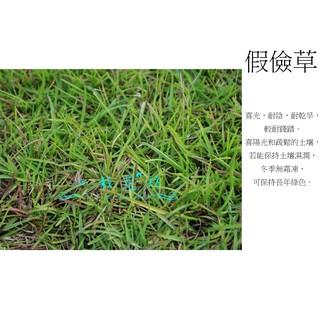 心栽花坊-假儉草半坪售價190特價150/巴西地毯草/台北草/玉龍草/果嶺草/百慕達草/類地毯草