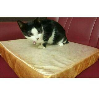 ✨現貨✨ 仿真切片土司麵包坐墊 白土司 土司坐墊 寵物墊 寵物睡墊