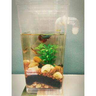 (My Fun Fish懶人魚缸)自動換水 辦公室小魚缸 鬥魚缸 創意魚缸