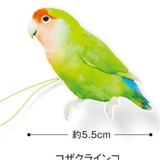 日本小鸚萬用夾