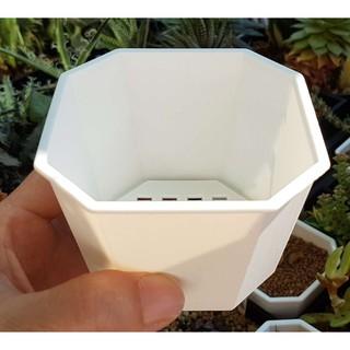 【陽台多肉花園】3.5吋 (對角 10.6公分) 白色 八角盆 八角方盆 淺八角盆 栽培盆 塑膠花盆 新北市三重區自取