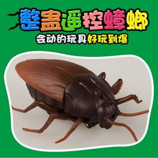 現貨 紅外線遙控蟑螂 超仿真蟑螂 玩具蟑螂 蟑螂玩具 嚇人 惡作劇 整人玩具 萬聖節 娃娃機 批發 聖誕禮物