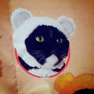 貓咪熊熊帽 貓帽子 日本扭蛋