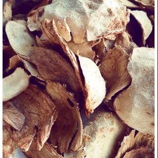 愛玉殼只有殼沒有愛玉籽