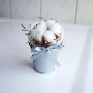 乾燥花小盆花系列-軟綿綿棉花