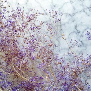 乾燥花材 乾燥花 不凋木滿天星 進口木滿天星 紫色