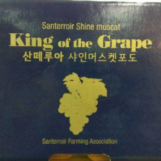 韓國麝香葡萄
