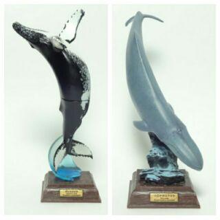 未拆 初版 座頭鯨 藍鯨 奇譚 NTC 圖鑑 海洋Ⅰ 海洋1 大翅鯨 絕版 鯨魚 哺乳類 擬真動物 立體圖鑑 海洋生物