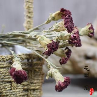 【康乃馨】天然乾花花束真花風乾家居裝飾鮮花拍攝擺件康乃馨插花