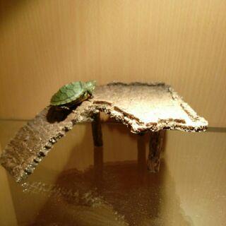 烏龜大型浮島