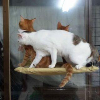 萌貓轉運站 貓吊床材料全面升級寵物床吸盤貓墊可拆洗睡窩貓寢具貓床貓玩具