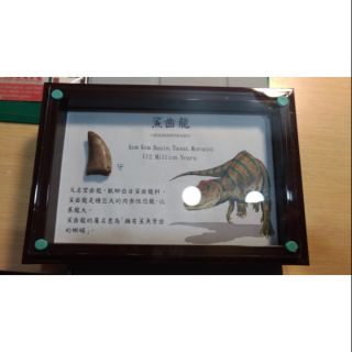 鯊齒龍牙_化石