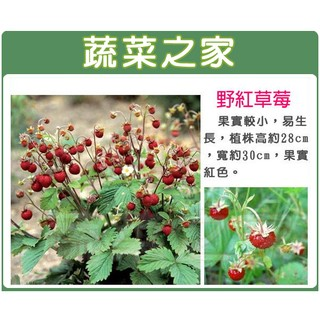 【蔬菜之家】I07.野紅草莓種子8顆(英國進口.果實較小,易生長,植株高約28cm,寬約30cm,果實紅色)
