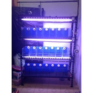 系統缸 魚缸 孔雀魚 溢流系統 加溫棒 pH量測 加溫棒控制器