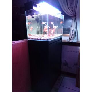 兩呎超白魚缸+櫃子