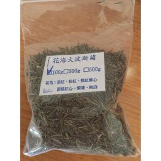 花海肥料波斯菊種子