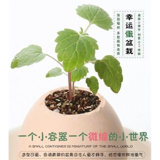 創意迷你植物仿真雞蛋殼植物小盆栽綠植盆栽(3入)