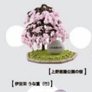 櫻花樹 海洋堂  上野  櫻花  上野恩賜公園  上野公園 扭蛋 日本名產