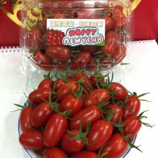 產地鹿谷直送溫室小番茄