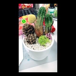 [全新自製含運]桌上型療癒盆栽開運盆栽