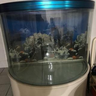 (二手)大型半月造型魚缸