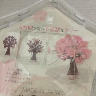 日本magic櫻 桌上魔法櫻花樹